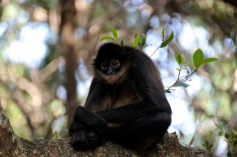 monkey-sanctuary-9