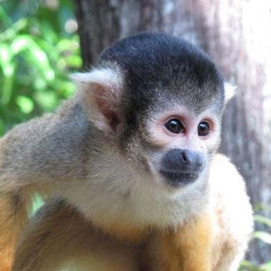 Bushbaby and Monkey Sanctuary in Hartbeespoort Dam