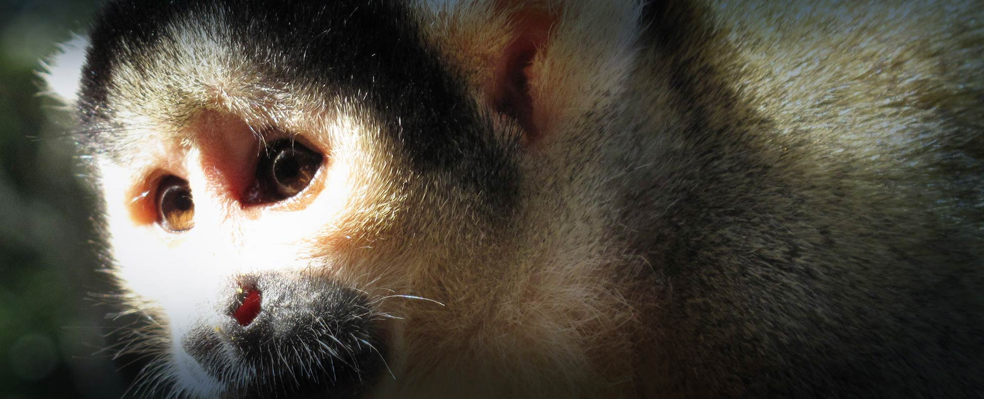 Monkey Sanctuary2